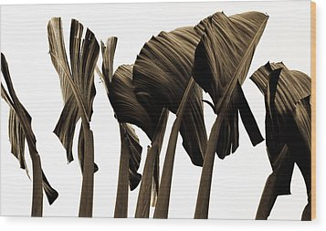 Banana Tree Leafs Wood Print by Atom Crawford