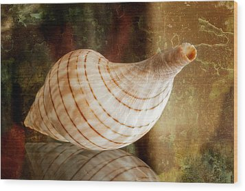 Banded Tulip Seashell Wood Print by Bonnie Barry