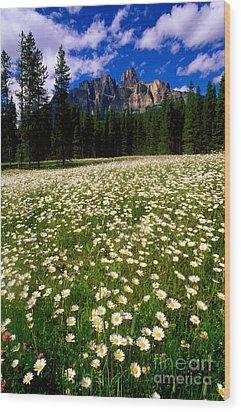 Banff - Castle Mountain Daisies Wood Print by Terry Elniski