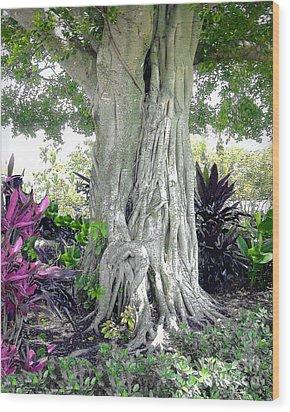 Banyon Tree Trunk Wood Print by Merton Allen