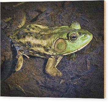 Barataria Swamp Frog Wood Print by Ray Devlin