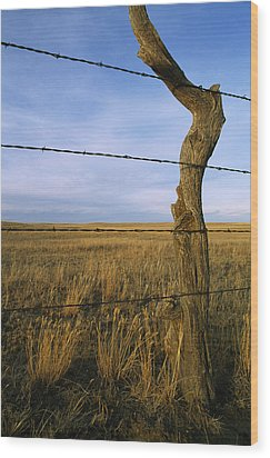 Barbed Wire Fence Along Dry Creek Road Wood Print by Gordon Wiltsie