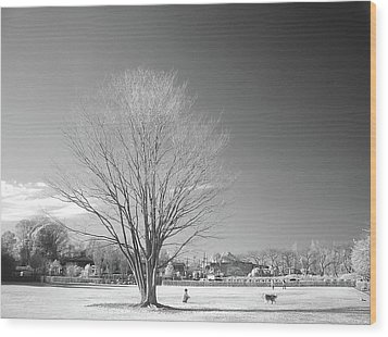Bare Frozen Tree In Winter Wood Print by Yaplan