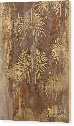 Bark Beetle Galleries Wood Print by Ted Kinsman