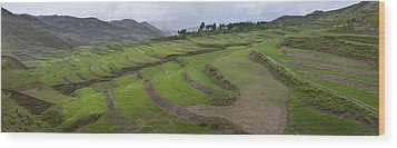 Barley Crop Grown On Terraced Hillsides Wood Print by Phil Borges