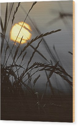 Barley Sunrise Wood Print by Nigel Forster
