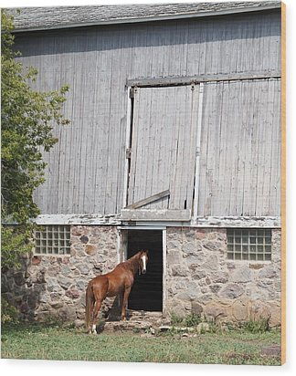 Barn And Horse Wood Print by Kristine Bogdanovich