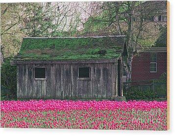 Barn Intensified Wood Print