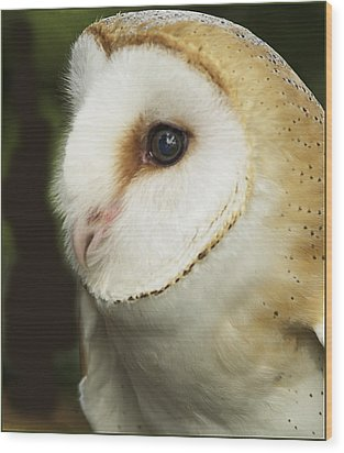 Barn Owl Close-up Wood Print by Barbara Middleton
