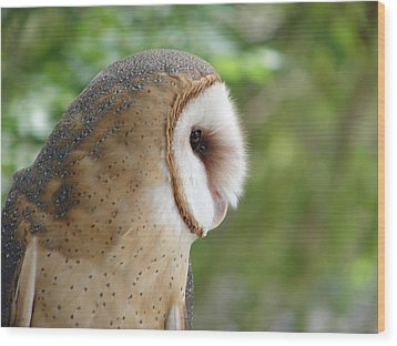 Barn Owl Wood Print by Randy J Heath