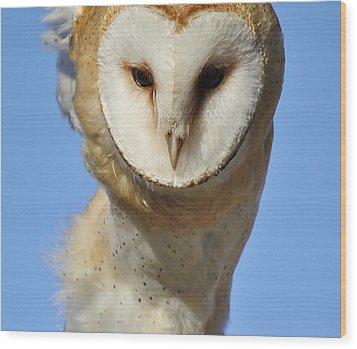 Barn Owl Up Close Wood Print by Paulette Thomas