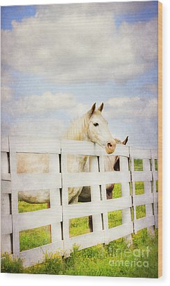 Barn Yard Dreamer Wood Print by Darren Fisher