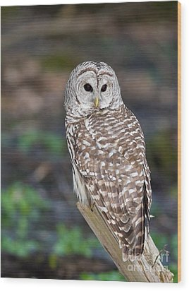 Wood Print featuring the photograph Barred Owl by Les Palenik