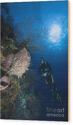Barrel Sponge And Diver, Belize Wood Print by Todd Winner