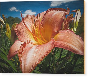 Basking In The Sunlight - Peach Colored Lily In A Flower Garden On A Hot Summer Day Wood Print by Chantal PhotoPix