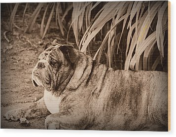 Wood Print featuring the photograph Baydie by Jeanette C Landstrom