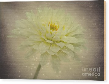 Be A Star Wood Print by Angela Doelling AD DESIGN Photo and PhotoArt