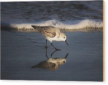 Beach Bird Wood Print by Paulette Thomas
