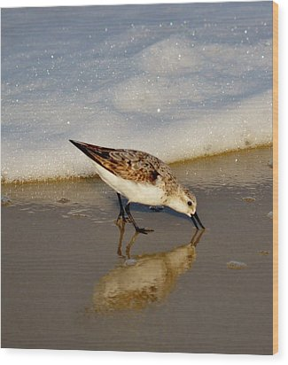 Beach Bird Wood Print by William Bartholomew