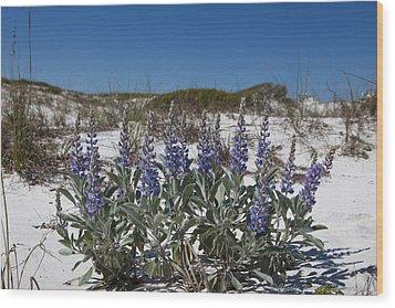 Beach Flora Wood Print by Charles Warren