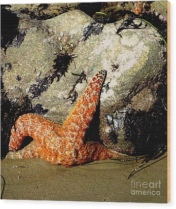 Beach Starfish Wood Print by Danuta Bennett