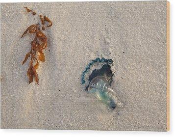 Beached Wood Print by Charles Warren