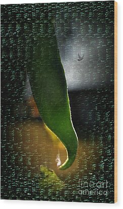 Bean 12 Sting  Wood Print by The Stone Age