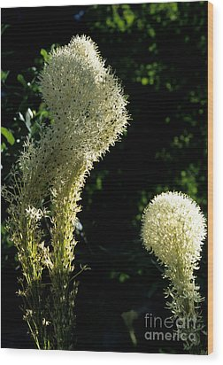 Wood Print featuring the photograph Bear-grass I by Sharon Elliott