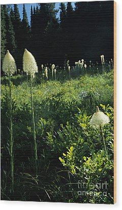 Wood Print featuring the photograph Bear-grass II by Sharon Elliott