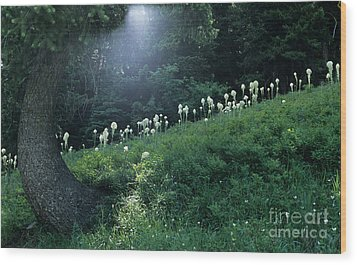 Wood Print featuring the photograph Bear-grass Ridge by Sharon Elliott
