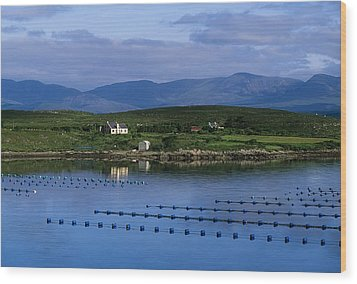 Beara, Co Cork, Ireland Mussel Farm Wood Print by The Irish Image Collection