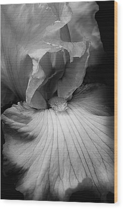 Bearded Iris Flower Black And White Wood Print by Jennie Marie Schell