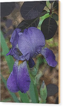 Wood Print featuring the photograph Bearded Iris by Michael Friedman