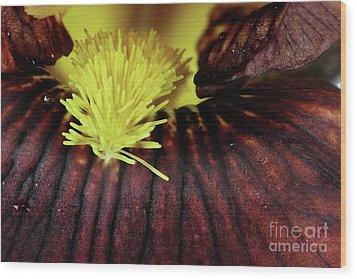 Bearded Iris Wood Print by Stephanie Frey