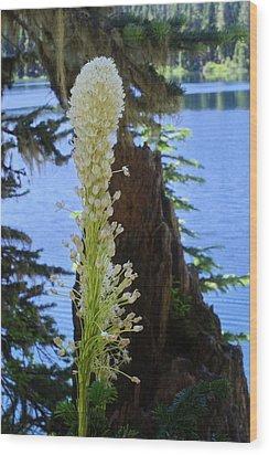 beargrass and Stump Wood Print
