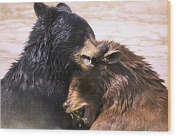 Bears In Water Wood Print by Carson Ganci