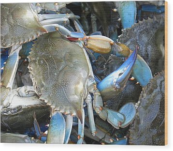 Beaufort Blue Crabs Wood Print by Patricia Greer