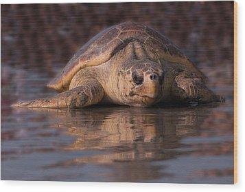 Beaufort The Turtle Wood Print by Susan Cliett