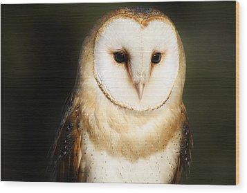 Beautiful Barn Owl Wood Print by Paulette Thomas
