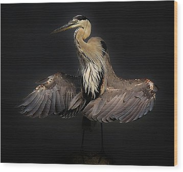 Beautiful Blue Heron Wings Wood Print by Paulette Thomas