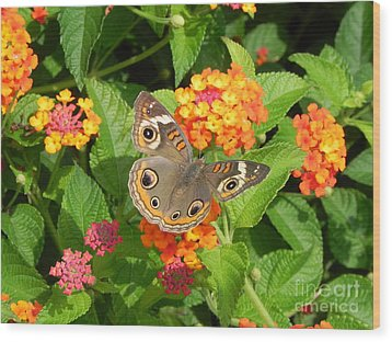 Beautiful Butterfly Wood Print by Sandy Owens