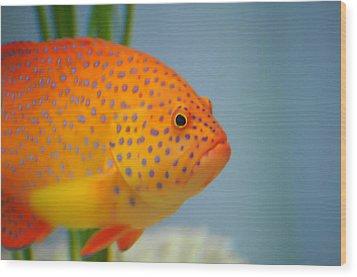 Beautiful Fish Wood Print by Michael Krahl