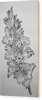 Beautiful Gladiolas Wood Print