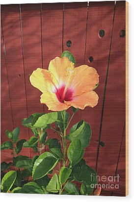 Beautiful Hibiscus Wood Print by Mike Ivey