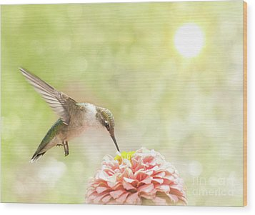 Beautiful Hummingbird Wood Print