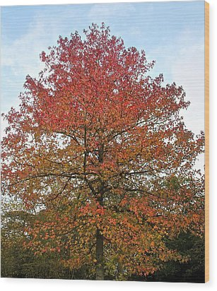 Beautiful In Red Wood Print by Karen Grist