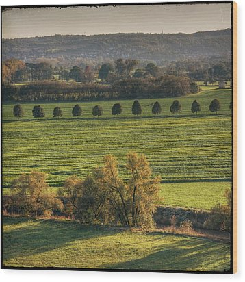 Beautiful Landscape With Trees And Field Wood Print by Fsn