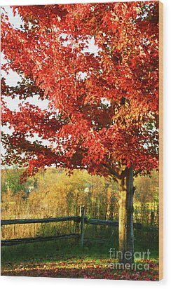 Beautiful Red Maple Tree  Wood Print by Sandra Cunningham