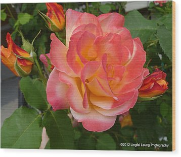 Wood Print featuring the photograph Beautiful Rose With Buds by Lingfai Leung