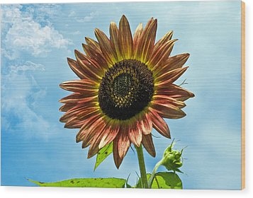Wood Print featuring the photograph Beautiful Sunflower by Susan Leggett